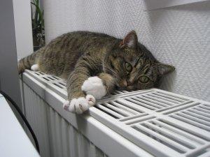 Общедомовой счетчик на отопление кто должен ставить