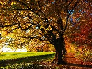 Земли лесного фонда